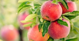 Welches Obst kann ich Entsaften?
